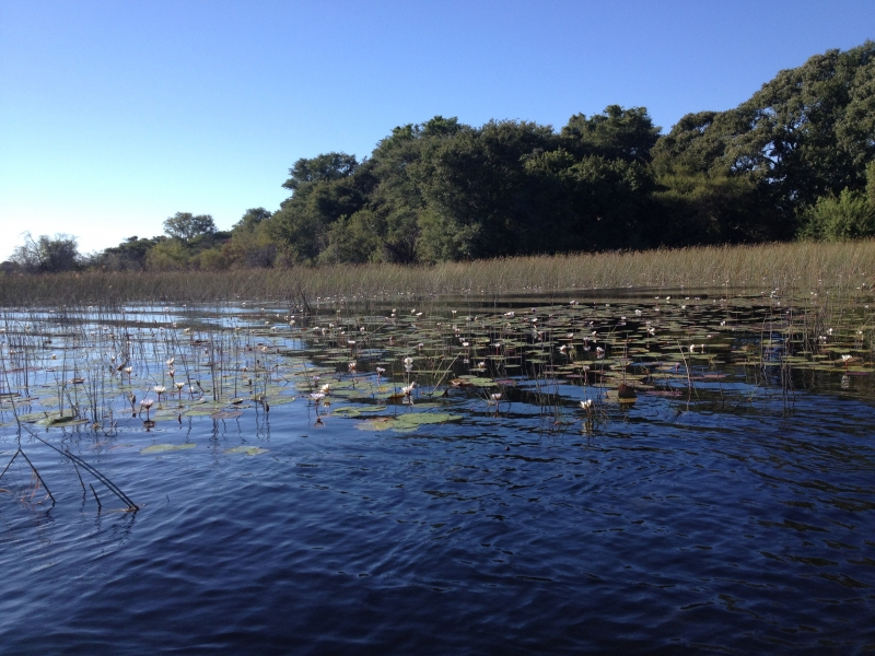 Boro_river_Okavango_2